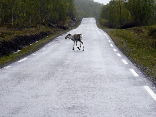 Animales en la carretera